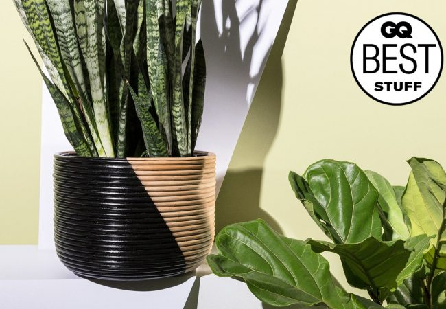 12 Best Indoor Plants That Even You Can't Kill